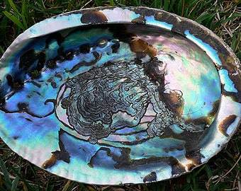 "LARGE ABALONE Shell 5""-6"" with FREE Mini Sage for Smudging"