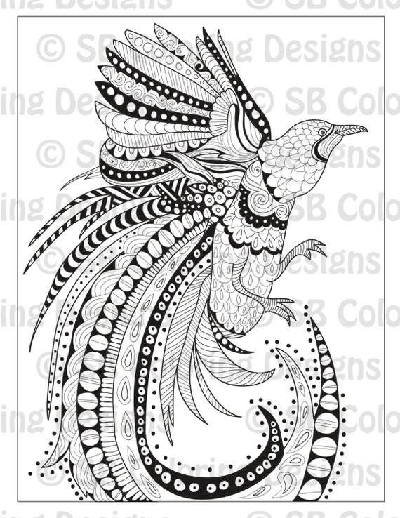 bird of paradise coloring page - bird of paradise advanced coloring page
