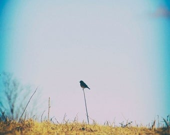 Bird Print, Fine Art Photography, Blue Silhouette