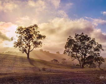 Tree Sunbeams