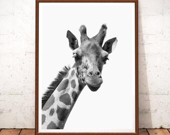Giraffe Print, Giraffe Art, Animal Print, Safari Nursery, Nursery Animal Wall Art, Giraffe Photo, Black and White Decor, Safari African