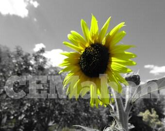 Sunshine Set