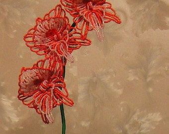 02 Orchid 02 02 Orchid Орхидея