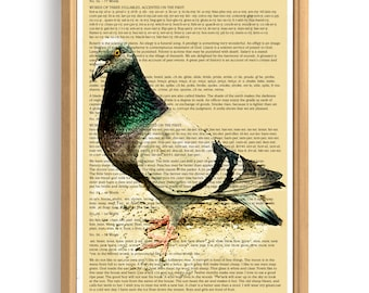 Dove. City bird. A symbol of peace. Printed poster.