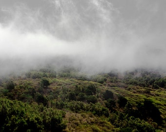 Trees | Forest | Green Yellow | Mist Fog | Fine Art Photography | Photo | polychromatophil | Canary Islands | Mystic | Relaxing Macchia