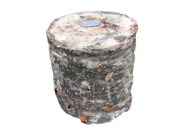 Shiitake Birch log 10 lb