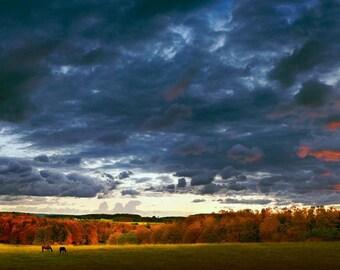 Sunrise Horses, Grazing, landscape, Charlevoix, Michigan landscape, photography, wall art, panorama