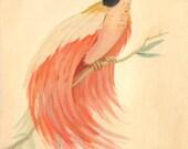 Bird of Paradise Print 8x10