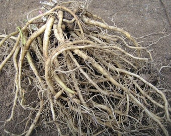 3 Live Valerian Root Crowns -  (Valeriana officinalis) - [crown Roots Plant plants]