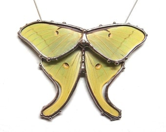 Real Luna Moth Necklace - Statement Necklace - Wearable Nature Art
