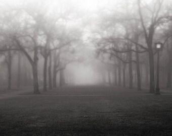 Fog Photography, Trees, Black and White Photo of Rice University Campus, Moody Gray Fine Art
