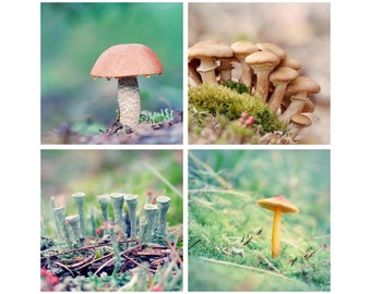 Woodland Art Set, Mushroom Prints, Forest Floor, Maine Nature Photography, Woodland Photography Set