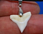 Bull Shark Tooth Pendant Adjustable Necklace SUP Surfer Great Sharks Teeth Choice of Colors