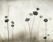 Watercolor art nature botanical art archival print black white monochomatic wall art  'Pin Cushions'