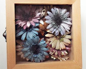 Prima - Naturally Daisy - Box Set of 20