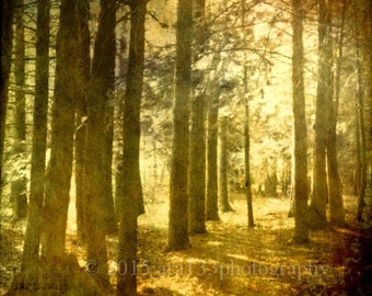 Woodland Nature Photograph, Surreal Forest, Trees, Yellow, Gold, Black, Mist, Fog, Sun, 5x5 inch fine art photograph print, Iinto The Mist