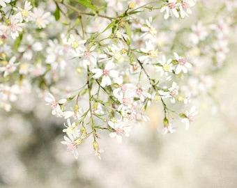 Aster Art Print, Wood Aster Photo, Nature Photography, Floral Art Print, Woodland Art, Flower Wall Decor, Neutral Home Decor