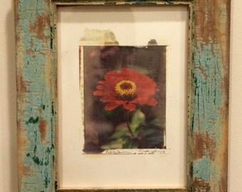 Polaroid transfer - framed original Red Zinnia in rustic frame