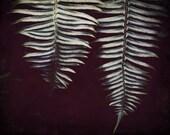 Fern art print / forest fern photograph / dark green black wall art / dark foliage plant leaves / 'Forest ferns'