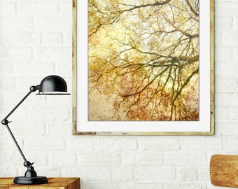 Gold tree wall art, nature photography, autumn yellow tree, art print, amber gold living room wall art - Canopy