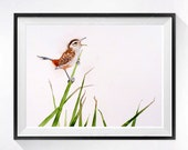 Bird Art Watercolor Print Small bird nature painting Wildlife art Marsh Wren realistic artwork, Earth tone color field, Mothhers day Gift  B