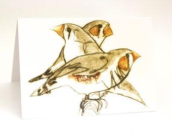 Three Finches, Greeting Card, Bird Art Card, Bridget Farmer, Bird Art, Zebra Finch