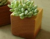 Cactus Planter, Cubist Modern Indoor Garden Decor, Small Wood Planter, Gift  for Gardender
