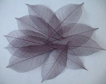 Large Purple Skeleton Leaves