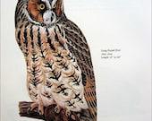 PRINT SALE 20% OFF Vintage 1960's Long Eared Owl Bird Print for Framing, Marie Bohlen Illustration, North American Birds Large Bookplate