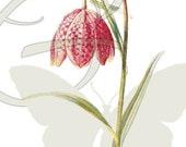 Digital Flower Vintage Printable Clip Art Image Download Illustration Botanical Wildflower Graphic
