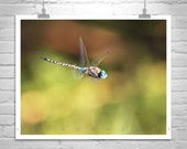 Dragonfly, Insect Art, Nature Photography, Green, In Flight, Fine Art Photography, San Rafael Valley, MurrayBolesta, Dragonflies