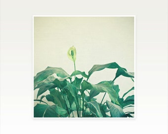 Flower Photography, Botanical Art, Gift for Gardener, Minimal Plant Wall Decor - Peace Lily