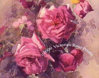 French Pink Roses, Art Print, Shabby Chic Decor, McLennan