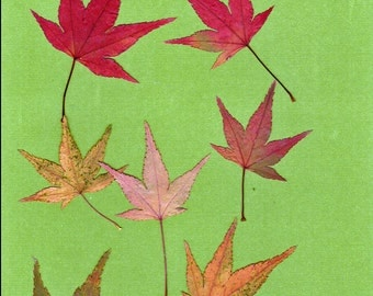 Pressed Japanese Maple Leaves (Small) - 20 each