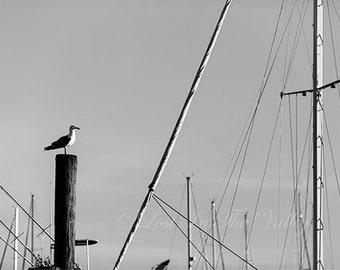 Beach Photography, Ocean Photo, Nautical Wall Decor, Seagull Photograph, Boat Mast, Fine Art Print, Coastline, Seaside, Black, White, Grey