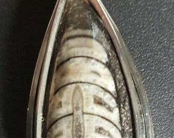 Orthocerus Fossil Pendant