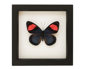 Butterfly Frame Shadowbox Painted Beauty Tropical Insect