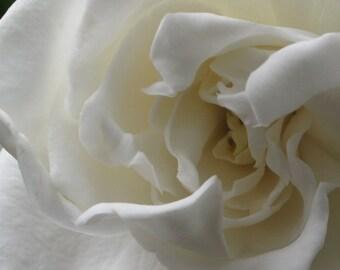 White Gardenia, Flower Photography, Nature Photograph, white home decor, macro flower, dramatic wall art, gardenia petals, summer flower art