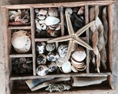Nature Collection in Antique Box