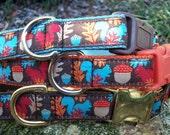 Fall Squirrel Dog Collar, Choice of Webbing & Buckle, Sizes M, L, XL