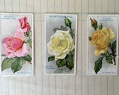 1926 Roses Tobacco Cards by W.D.& H.O. Wills No. 40-42