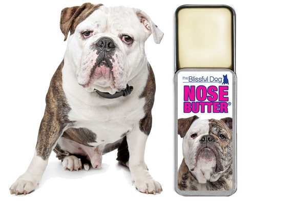 original english bulldog olde english bulldogge original nose butter 174 for by 3007