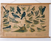 Sale Original Vintage Pull Down Chart birds made in Holland