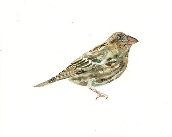 HOUSE FINCH Original watercolor painting 10x8inch
