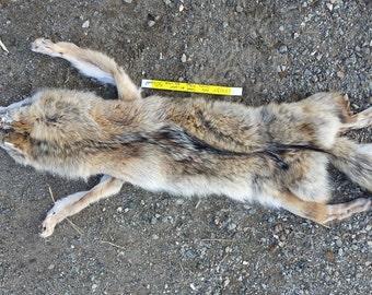 Coyote Fur Pelt- Soft garment Tanned -As shown Lot No. 18413Y
