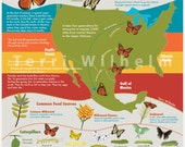 Fun Facts About Butterflies and Moths Infographic - Illustrated Map - Art Print