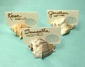 100 Seashell Place Card Holders - Beach Weddings, Beach Showers, Beach Dinners sea shells