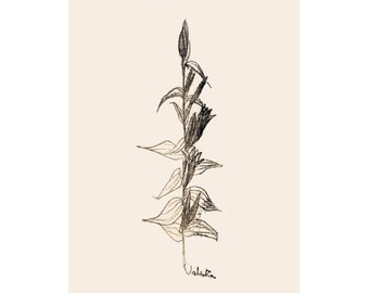 Art Print, Illustration Print, Nature Decor, Nature Art, Nursery Print, Botanical, Flower Art, Wall Art, rustic decor, boho decor