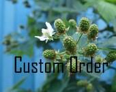 Custom Order for Beneath The Oak