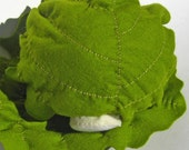 Ready Made for Immediate Shipment - Head of Lettuce or Cabbage